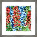 Indian Paintbrush And Bluebonnets Framed Print