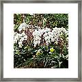 Indoor Patch Framed Print by Timothy Blair