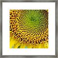 Inner Peace Forms Within This Sweet Yellow Sunflower Framed Print