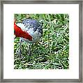 Inquisitive Redhead Framed Print