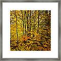 Into The Woods We Go  Framed Print