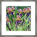 Iris Inspiration Framed Print
