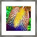 Iris Petal By Jan Marvin Framed Print