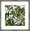 Irises Dancing In The Sun Painted Framed Print