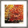 Is Autumn Already Framed Print