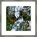 Isinglass Framed Print by Jeff Sinon
