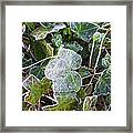 Ivy Leaves Framed Print