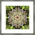 Jack In The Pulpit Mandala Framed Print