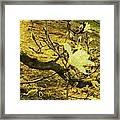 Jade Orchid Framed Print