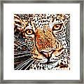 Jaguareyes Framed Print