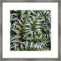 Japanese Ferns Framed Print