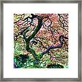 Japanese Tree In Garden Framed Print