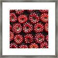 Japanese Wineberry Pattern Framed Print