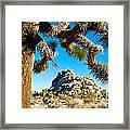 Joshua Tree And Jumbo Rocks By Quail Springs In Joshua Tree Np-ca Framed Print
