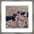 Joy Of Leaves Framed Print