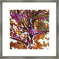 Judas Tree Jerusalem Framed Print
