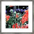 Julia's Garden II Framed Print