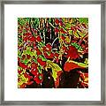 Jungle Abstract Framed Print
