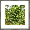Jungle And Rice Field Framed Print