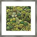 Jungle View Framed Print