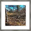 Junglescape1 2009 Framed Print