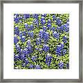 Just Bluebonnets Framed Print