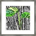 Just Green 2 By Diana Sainz Framed Print
