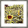 Just Look At Me Framed Print