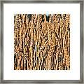 Just Wheat  Framed Print