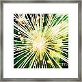 Kaboom Framed Print by Suzanne Luft