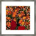 Kalanchoe Plant With Butterfly Framed Print by Garry Gay