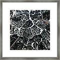 Kapur Trees Showing Crown Shyness Framed Print