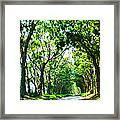 Kauai Trees Framed Print