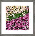 Keukenhof Gardens 22 Framed Print