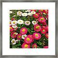 Keukenhof Gardens 39 Framed Print