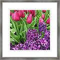 Keukenhof Gardens 40 Framed Print