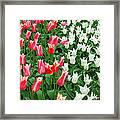 Keukenhof Gardens 7 Framed Print