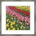 Keukenhof Gardens 74 Framed Print