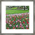 Keukenhof Gardens Panoramic 49 Framed Print