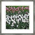 Keukenhof Gardens Panoramic 9 Framed Print