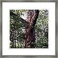 King Of The Timberline Framed Print by Garren Zanker