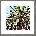 King Palm Framed Print