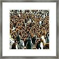 King Penguin Colony Framed Print