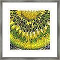 Kiwi Slice Framed Print