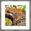 Knudsen Thin Toed Frog Framed Print