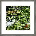 Koi Pond Framed Print