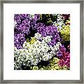 Many Colors Make A Beautiful Garden Framed Print