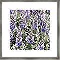 Laguna Beach Flora Framed Print
