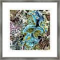 Lake Carnegie Western Australia Framed Print