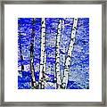 Land Of The Silver Birch Framed Print